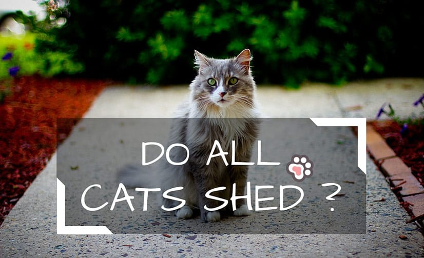 Do All Cats Shed ?