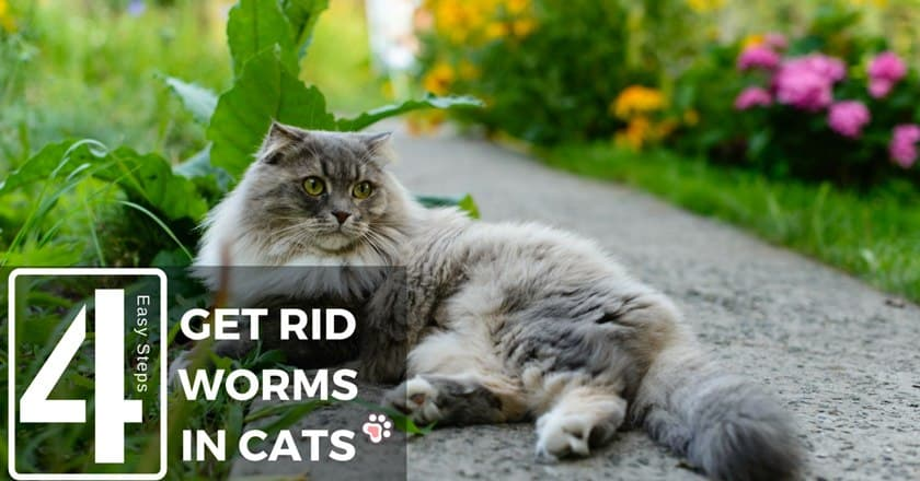How to Get Rid of Worms in Cats in 4 Easy Steps
