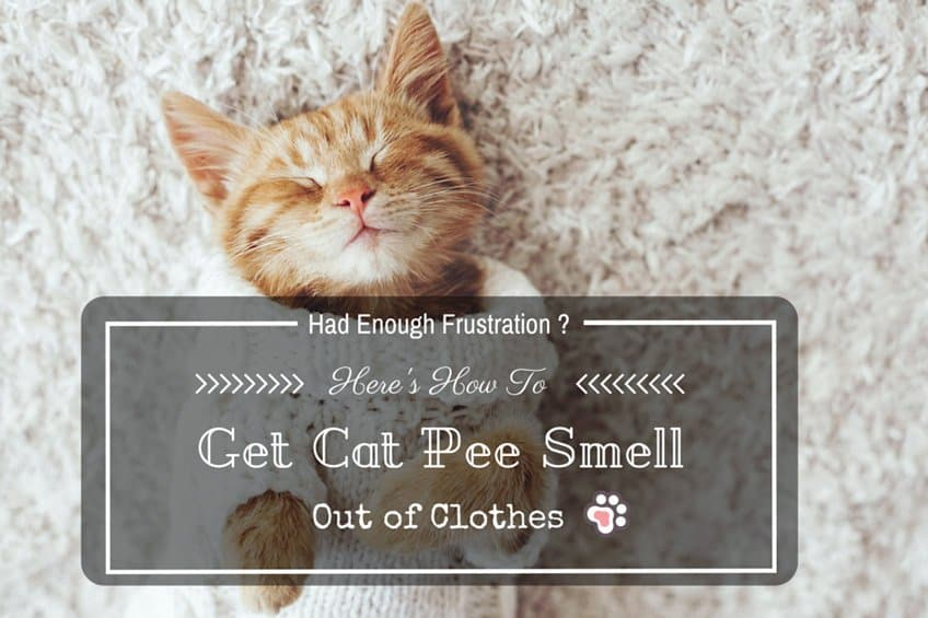 Had Enough Frustration? Here's How to Get Cat Pee Smell Out of Clothes