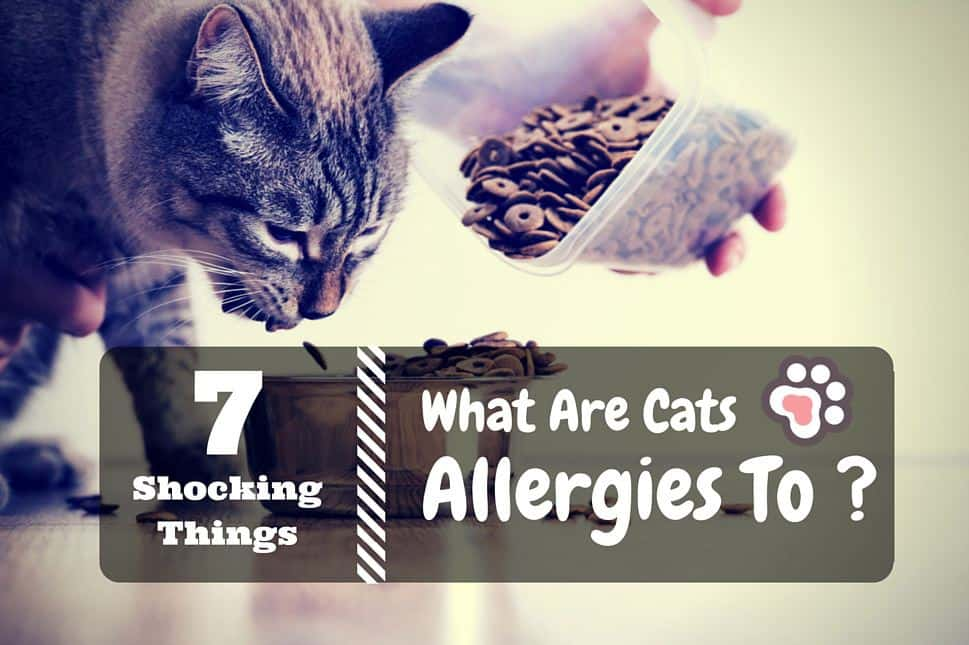 7 Shocking Things What Are Cats Allergies To