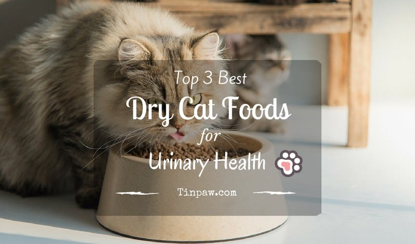 Best Dry Food For Cats With Urinary Problems
