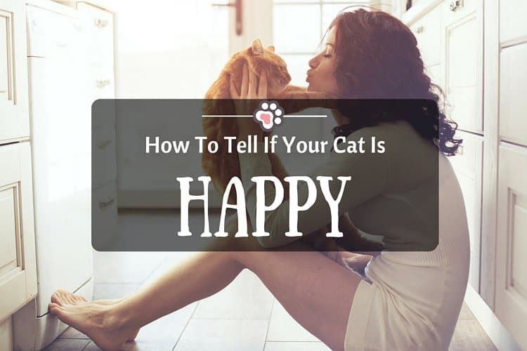 How To Tell If Your Cat Is Happy