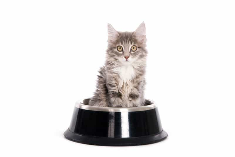 Best Automatic Cat Feeder Reviews 3