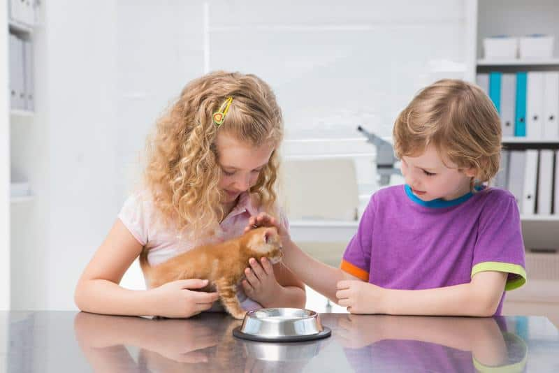 Best Automatic Cat Feeder Reviews 4