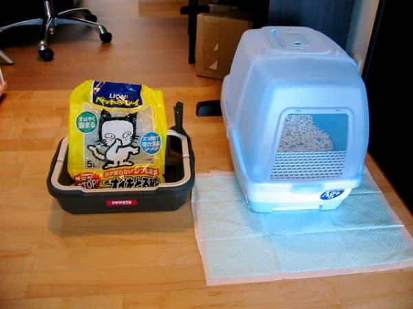 Best Cat Litter For Odor Control