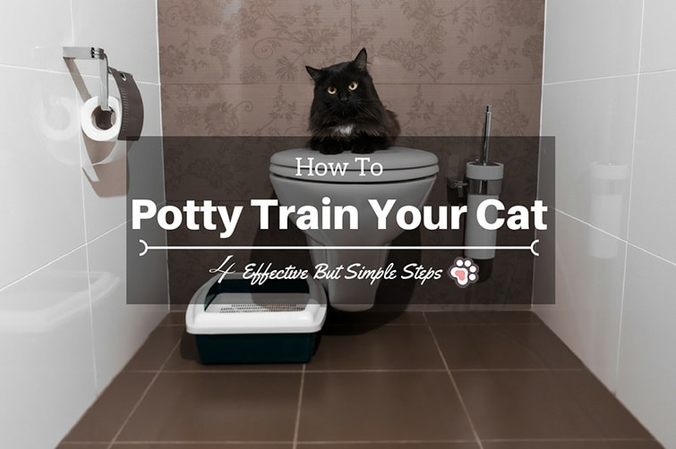 How To Potty Train a Cat: Kitty Needs These 4 Effective But Simple Steps