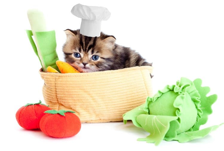 What Food Should You Geed To Poorly Cat