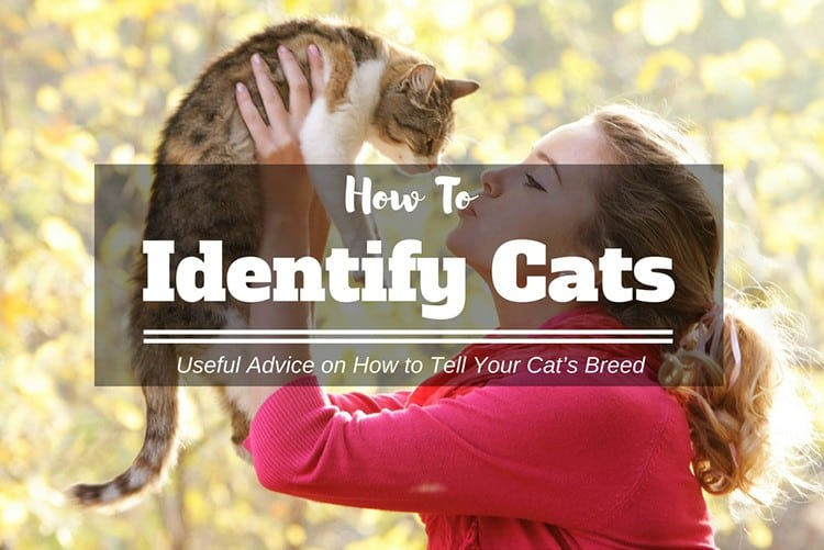 What Kind of Cat Do I Have? Useful Advice on How to Tell Your Cat's Breed