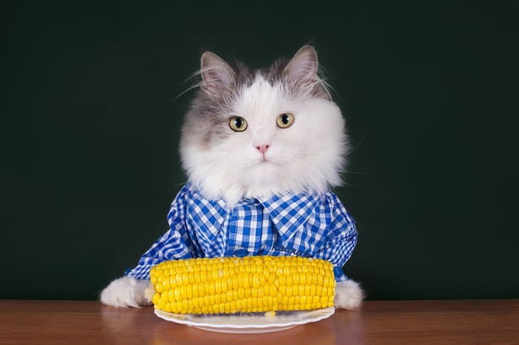 cat eat corn