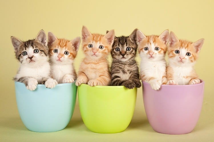 which does kittens eat