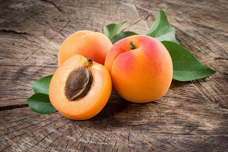 apricot tinpaw