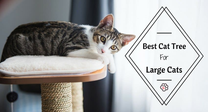 Best Cat Tree for Large Cats : You'll Love These 6 Affordable Picks