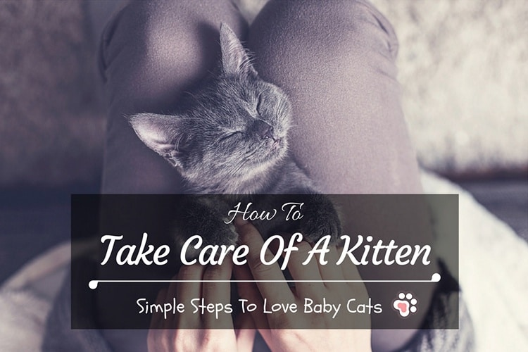 How To Take Care Of A Kitten: Simple Steps To Love Baby Cats