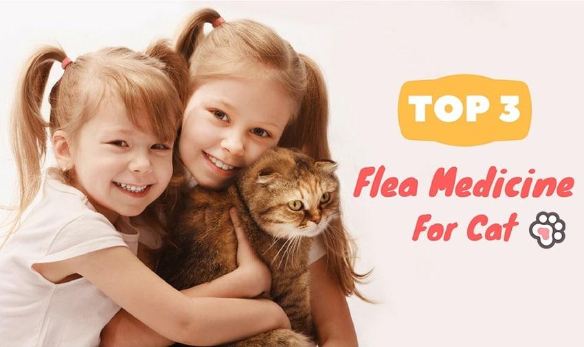 3 Best Flea Medicine For Cats: Quick Ways For Killing Fleas