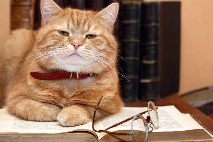 Seresto Cat Collar Reviews - TinPaw