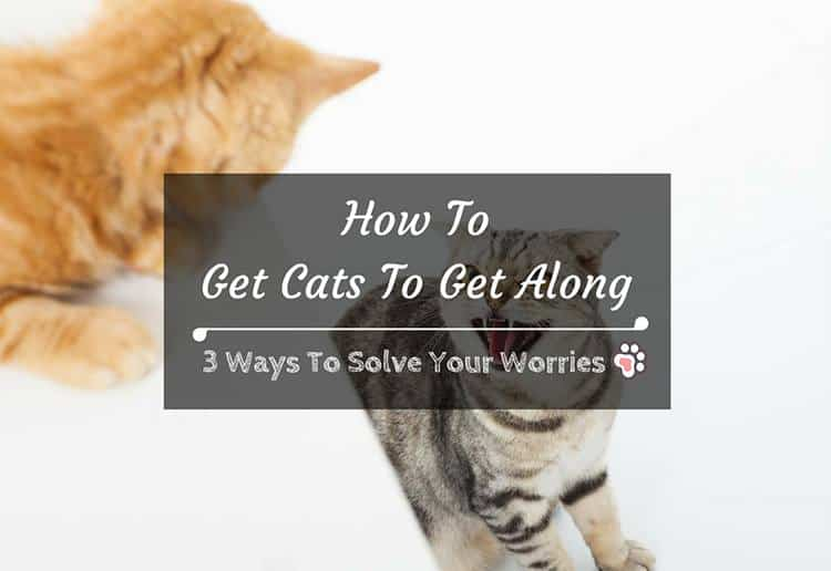 How To Get Cats To Get Along: 3 Ways To Solve Your Worries