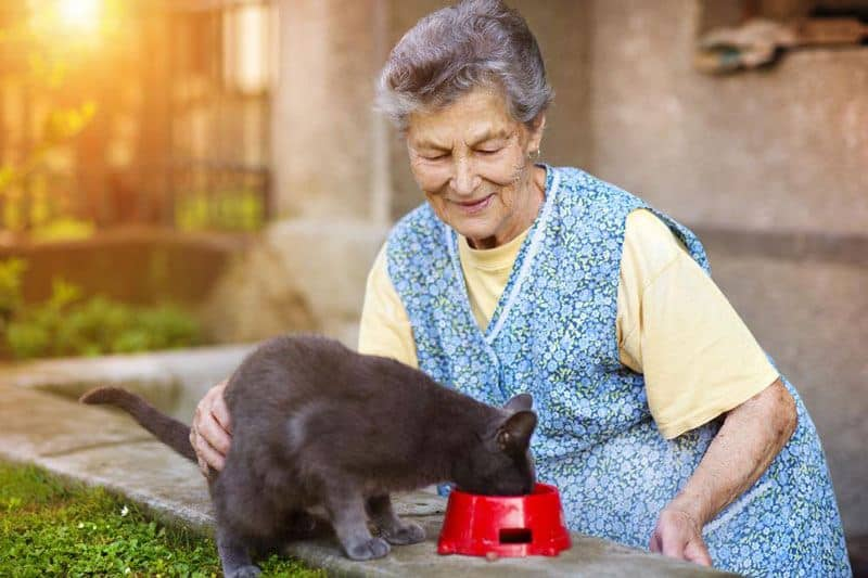Cat With Grandmother