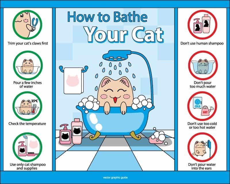do cats need a bath
