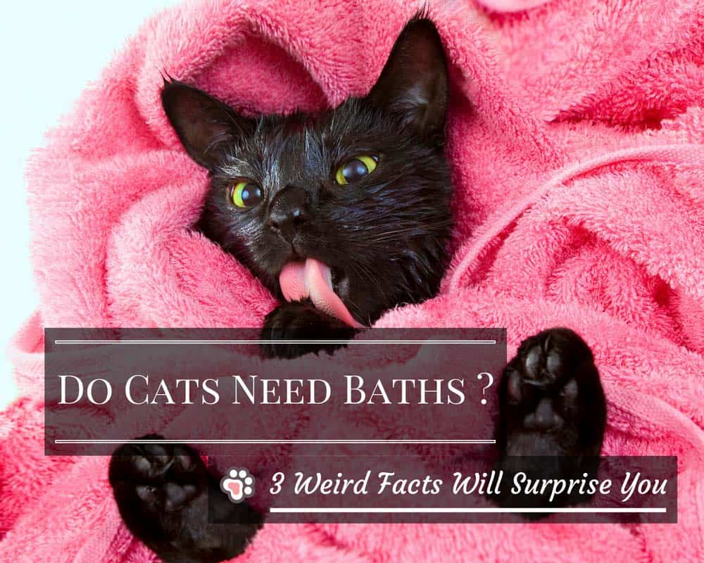 Do Cats Need Baths ? 3 Weird Facts about Cat Baths That Will Surprise You