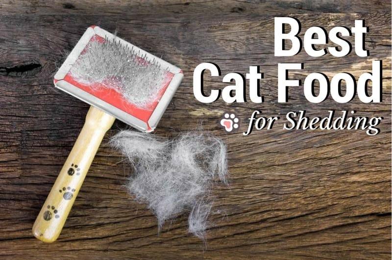 Best Cat Food for Shedding