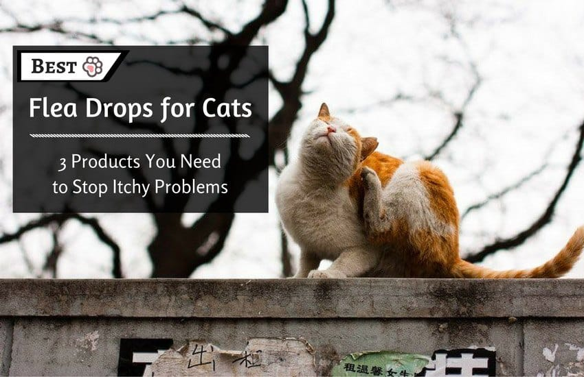 Best Flea Drops for Cats : 3 Products You Need to Stop Itchy Problems