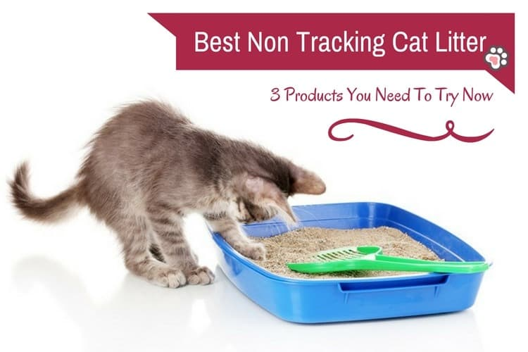 Best Non Tracking Cat Litter: 3 Products You Need To Try Now