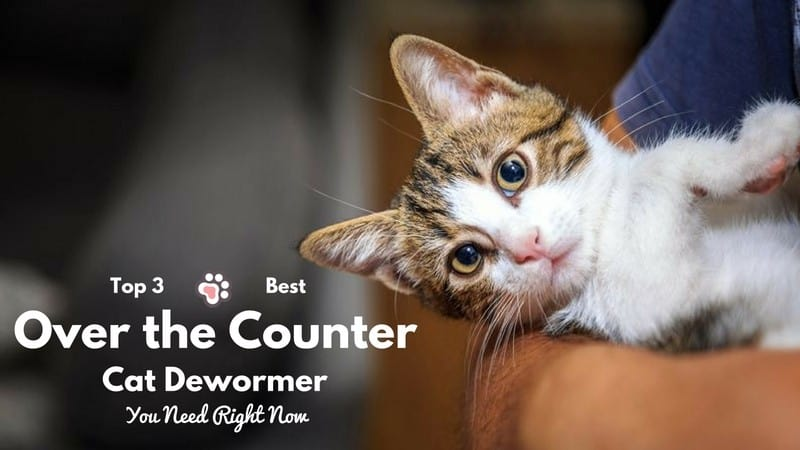 3 Best Over the Counter Cat Dewormer – You Need Right Now