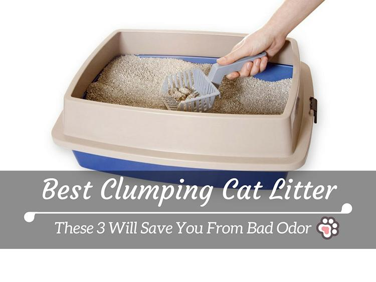 Best Clumping Cat Litter: These 3 Will Save You From Bad Odor