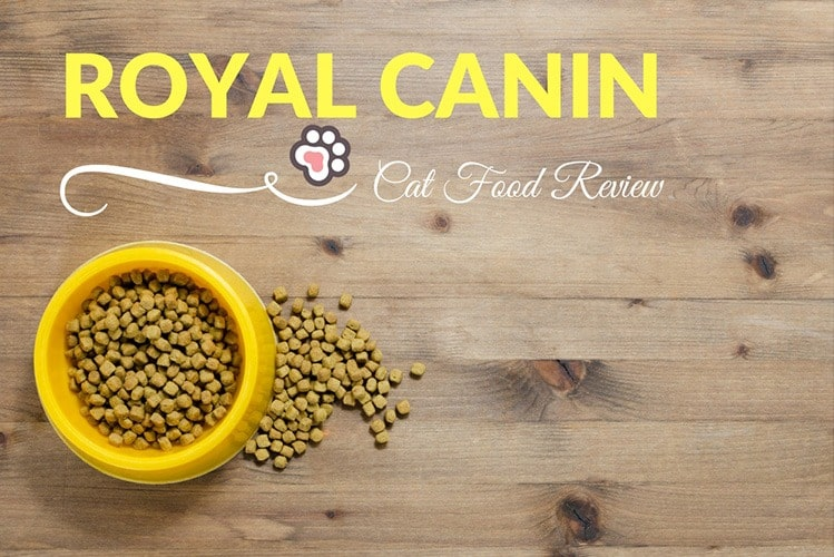 Royal Canin Cat Food Review - TinPaw
