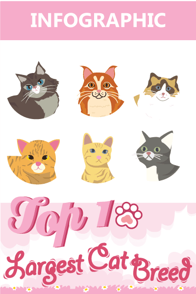 Banner Top 10 largest cat breeds