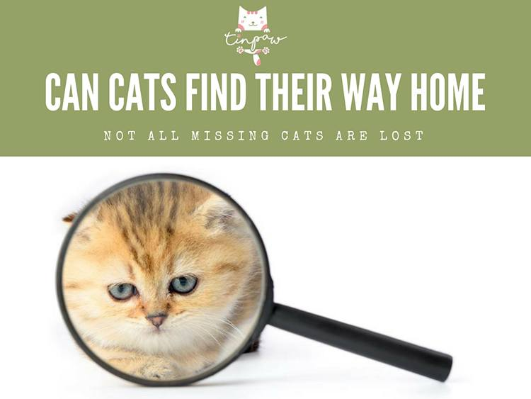 Can Cats Find Their Way Home? (Not All Missing Cats Are Lost)
