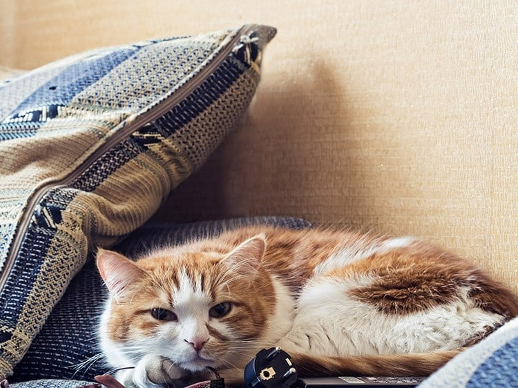 Is Cat Litter Bad for Cats