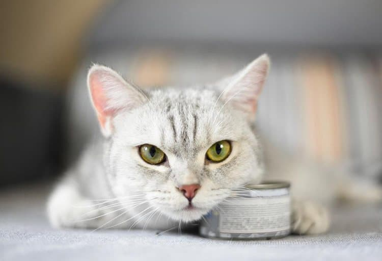 Why Making The Right Food in Cat Food is Important