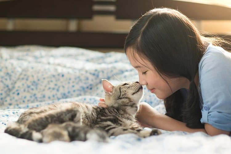 Are Cats Dangerous for Child