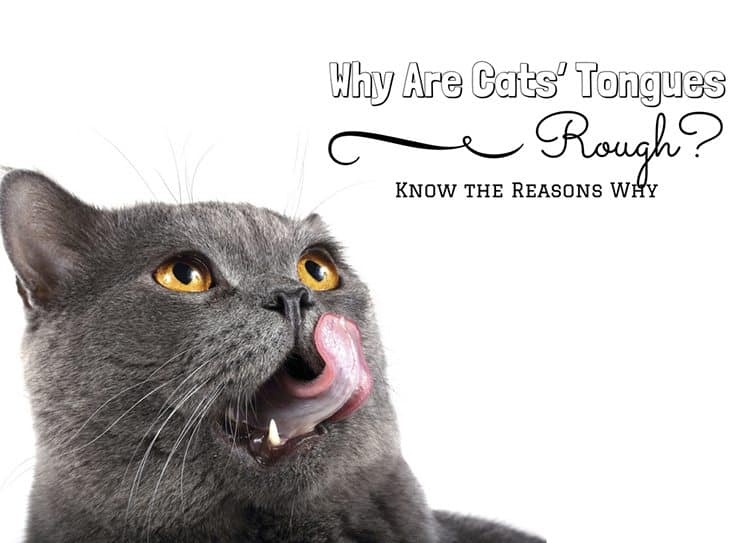 Why Are Cats' Tongues Rough? Know the Reasons Why