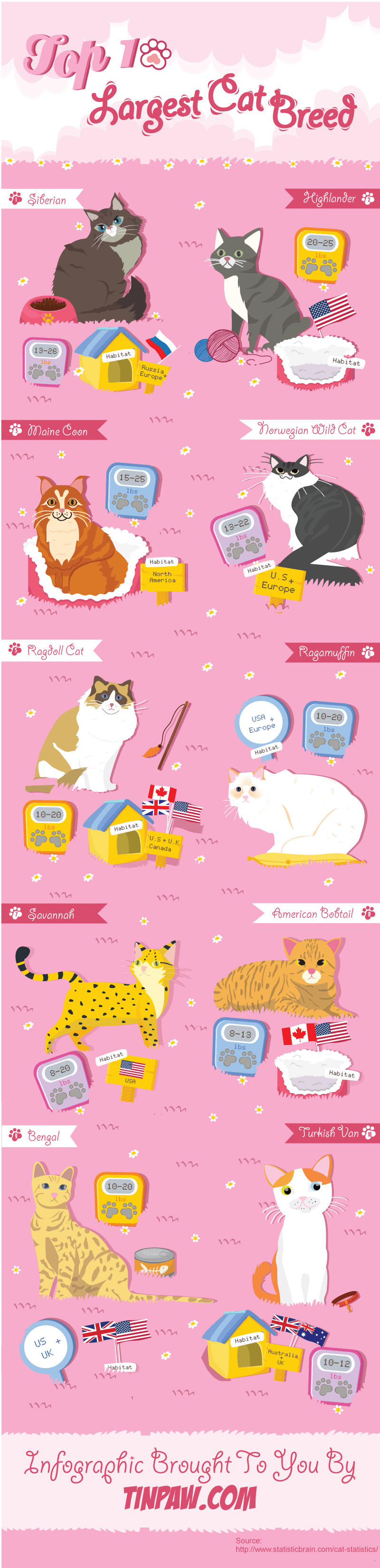 infographic-Top 10 largest cat breeds