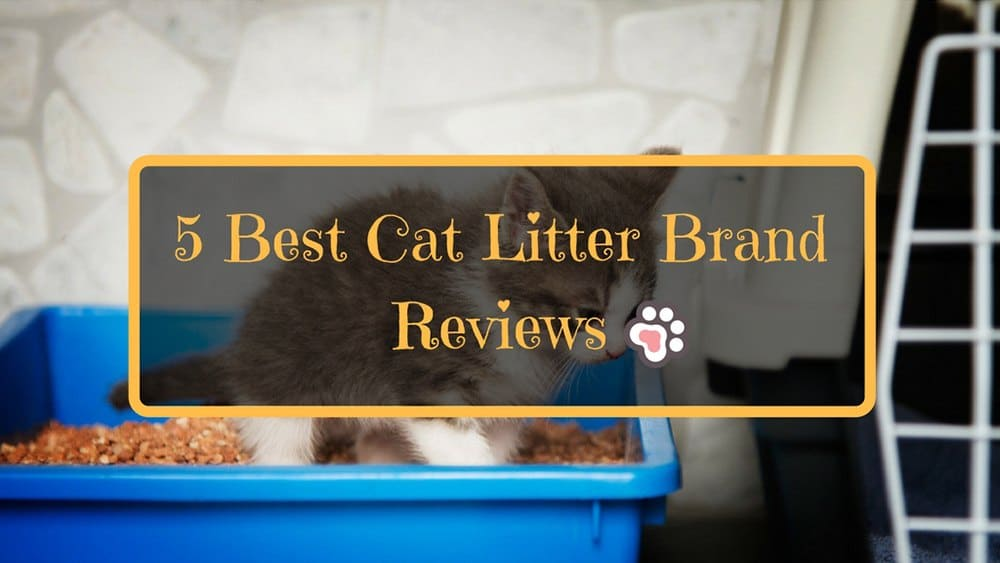 5 Best Cat Litter Brand Reviews : How To Choose the Right One