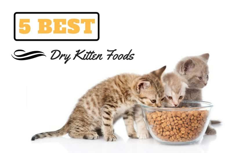 Best Way To Feed A Cat Wet Food