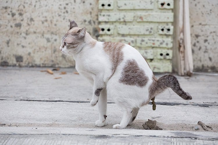 Best Food For Cat Prone To Diarrhea