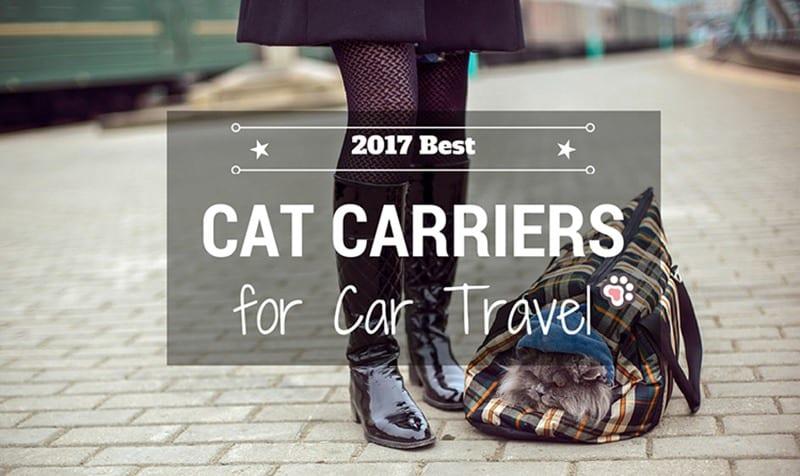 Choosing The Best Cat Carrier For Car Travel
