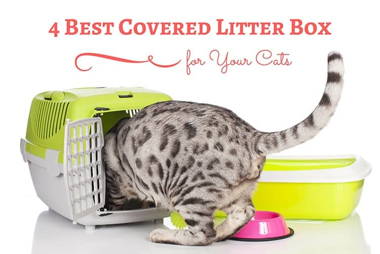 4 Best Covered Litter Box : More Superior, Guaranteed Quality