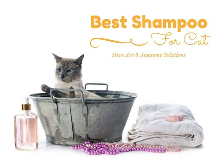 Best Shampoo For Cats: Yucky Cats? Here Are 3 Awesome Solutions