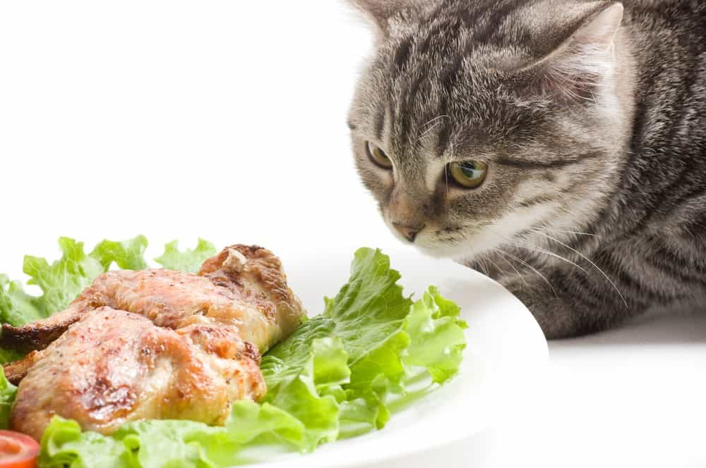 Cooked Cat Food