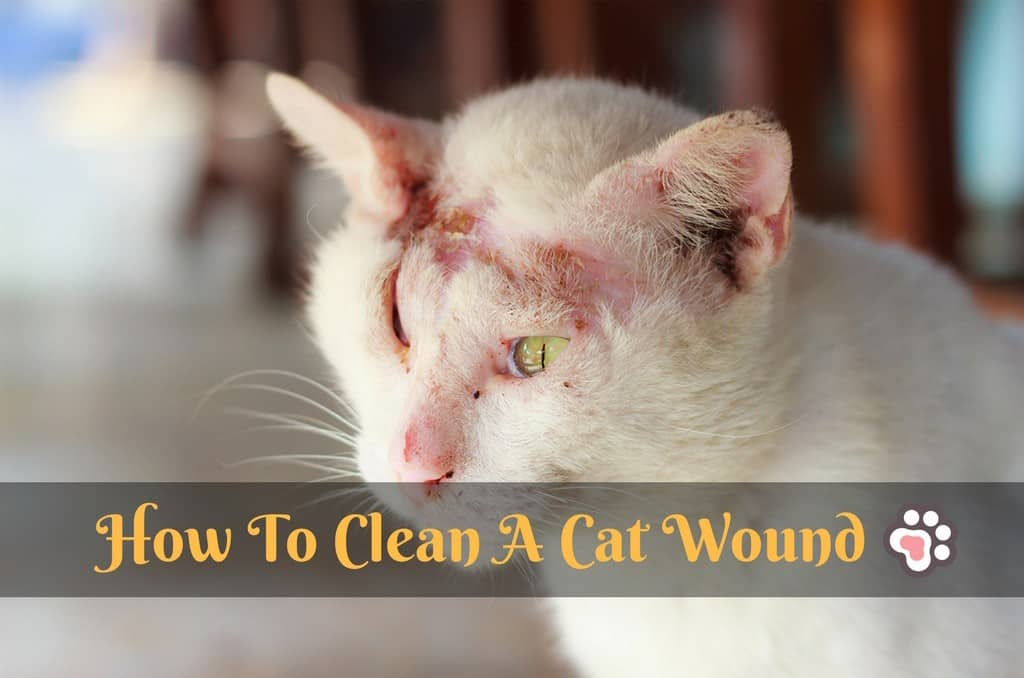 How To Clean A Cat Wound – The Easiest Way