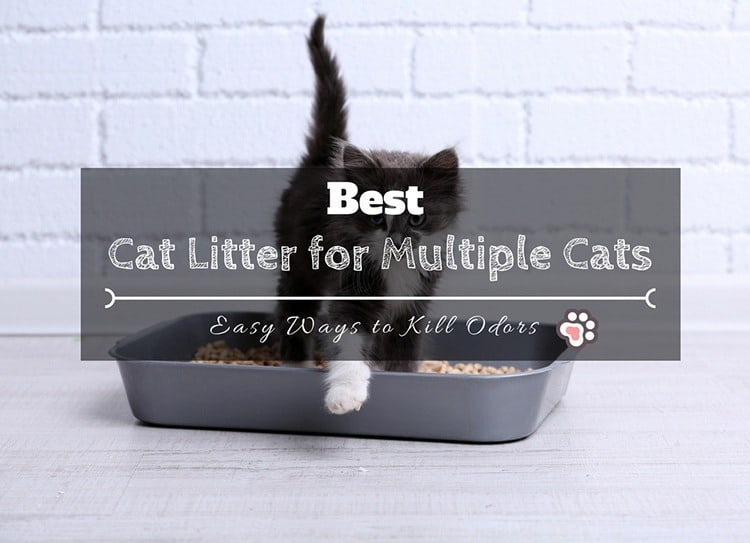 3 Best Cat Litter for Multiple Cats: Easy Ways to Kill Odors