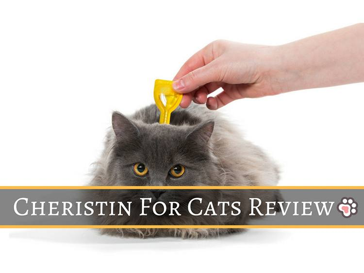 Cheristin for Cats Review: Everything You Need To Know