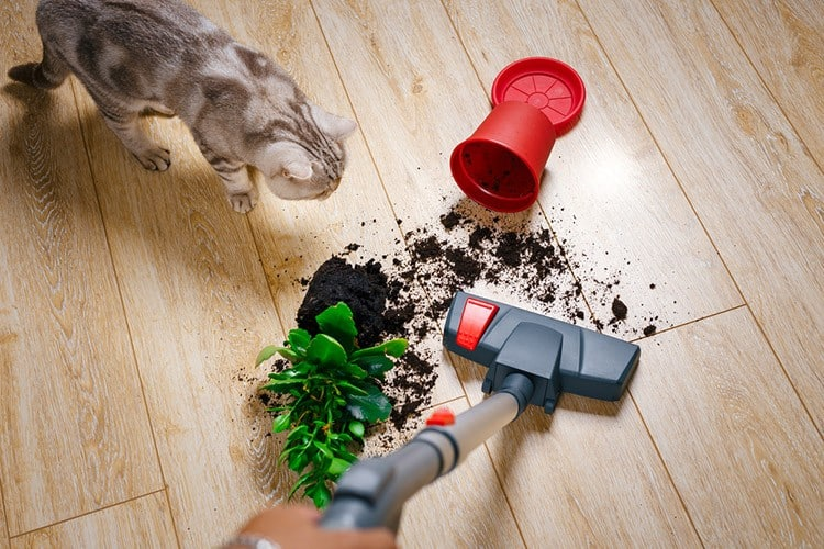 The Problems of Vacuuming Cat Litter