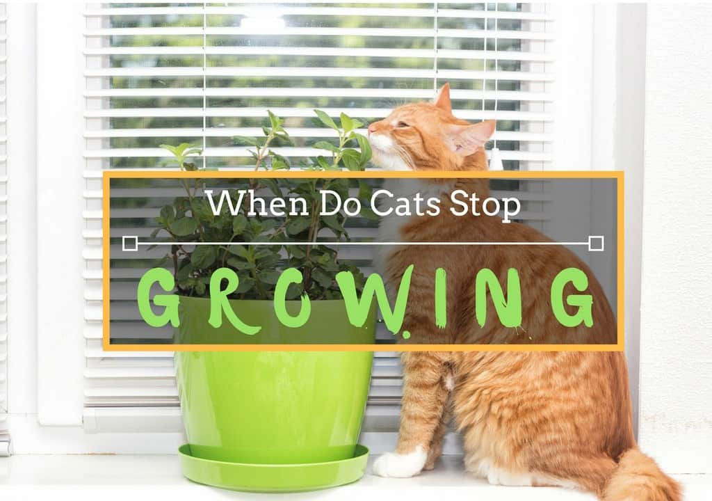 When Do Cats Stop Growing and When Are Cats Fully Grown?