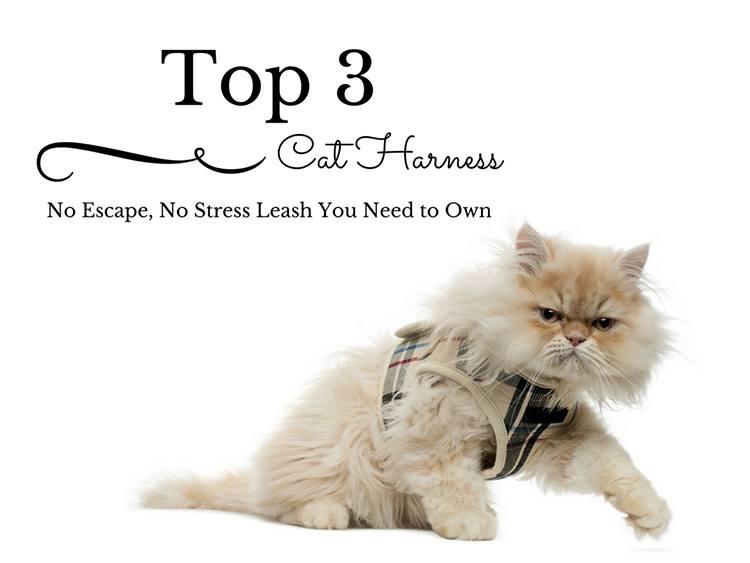 Best Cat Harness No Escape