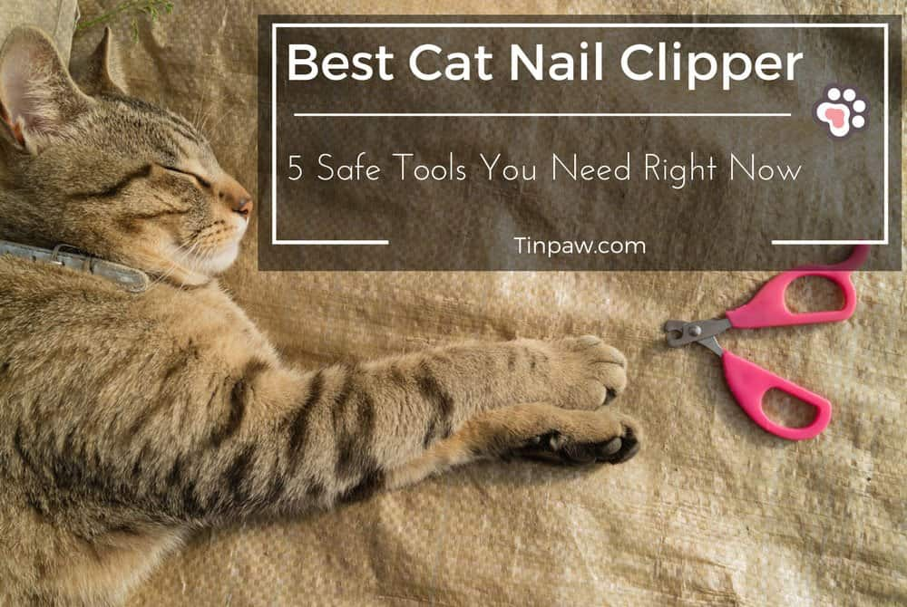 Best Cat Nail Clipper: 5 Safe Tools You Need Right Now